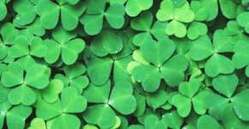 Hand Collected Irish Yarns